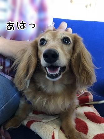 kinako10441.jpeg