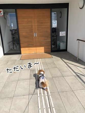 kinako10454.jpeg