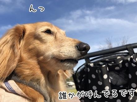 kinako10455.jpeg