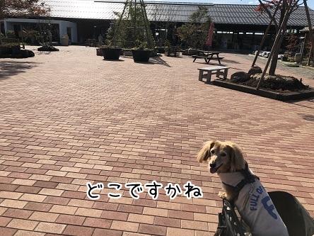 kinako10456.jpeg