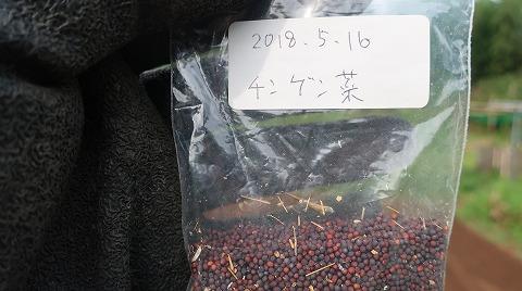 2018.8.17菜園11
