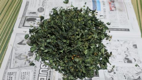 2018.8.18ハブ草茶