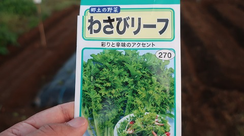 2018.9.17菜園14