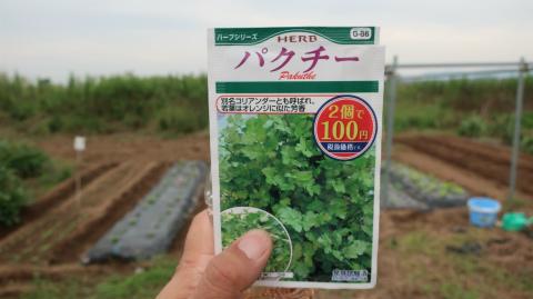 2019.9.23菜園19