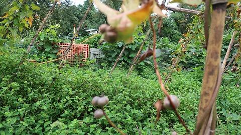 2018.10.6菜園31