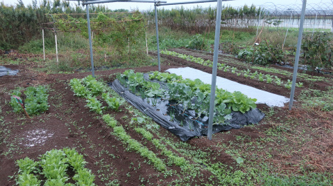 2018.10.11菜園5
