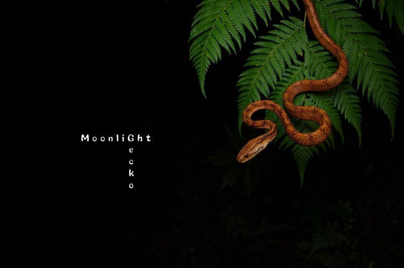 イワサキセダカヘビ