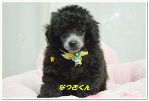 こうきくん&なつきくん顏バリ (5)