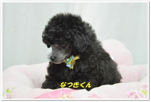 こうきくん&なつきくん顏バリ (2)