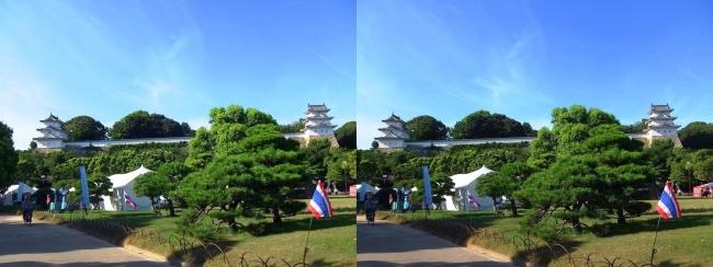 明石公園 武蔵の庭園(交差法)