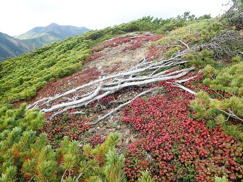 温泉岳54