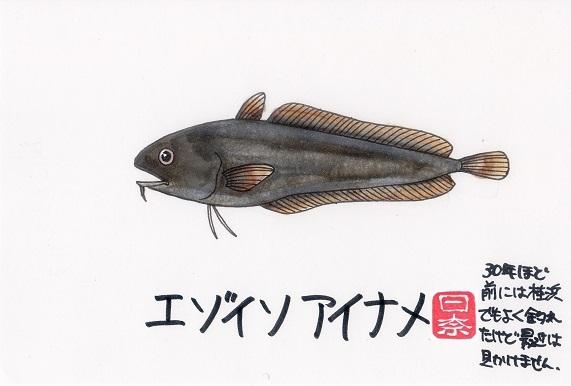 エゾイソアイナメ