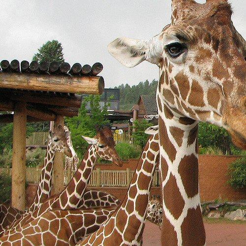 02a 500 Cheyenne Mountain Zoo
