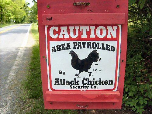 09b 500 Attack Chicken
