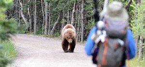 03b 300 staying safe around bears