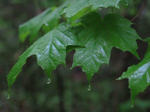 04a 600 20150806 (木) No2 Cold rain drips