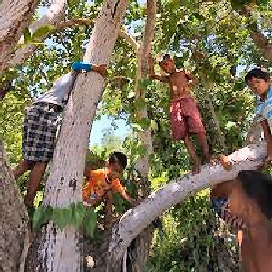 02a 300 kids climbing trees in Cambodia