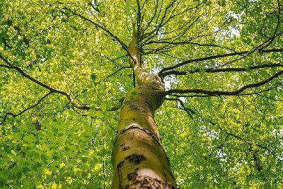 04b 400 tree crown 樹冠