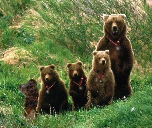 04fb 500 bear family
