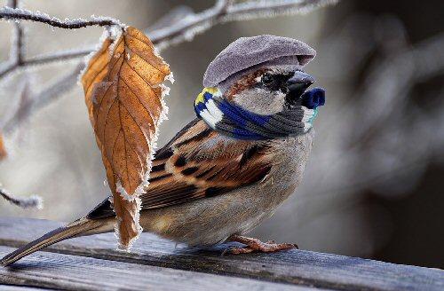 01a 500 Sparrow cold