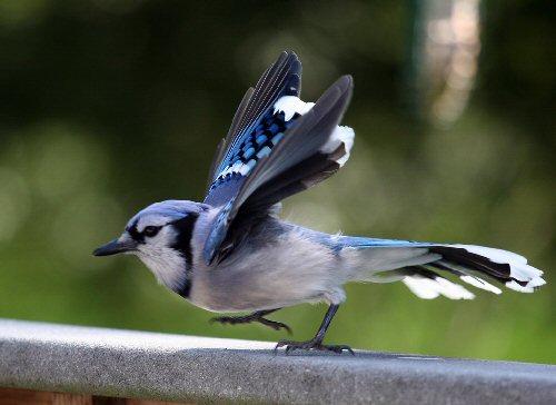 04e 500 stomp bird