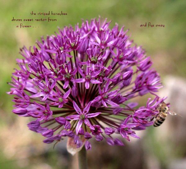 04a 600 20150716 (木) No2 the striped honeybee