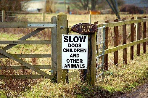 09ia 500 Slow dogs children