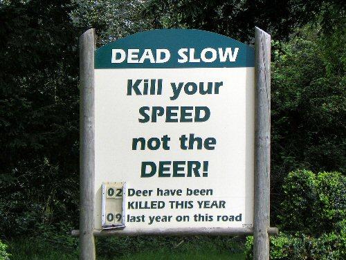 10e 500 Dead Slow
