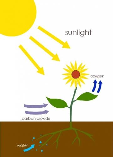 04a 500 photosynthesis