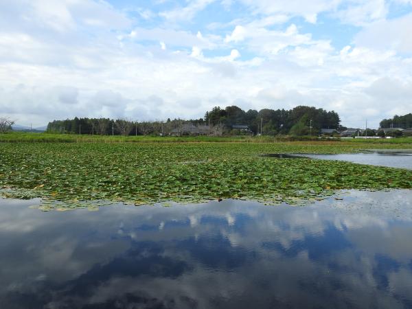 180924池花池青いイトトンボ_007