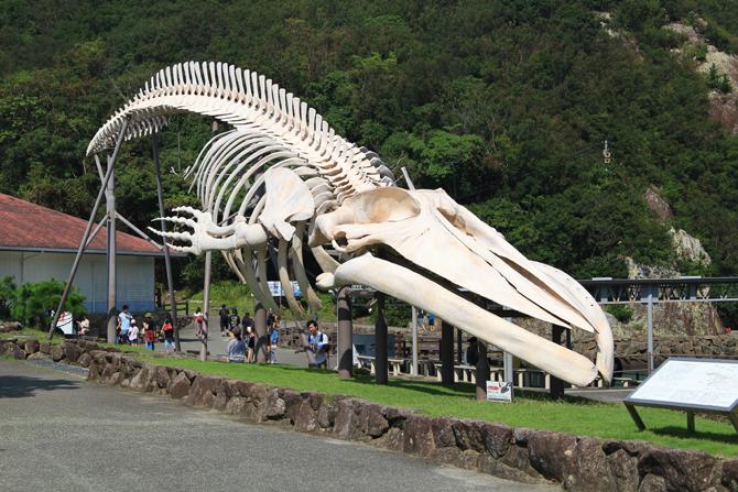 20180916鯨の模型