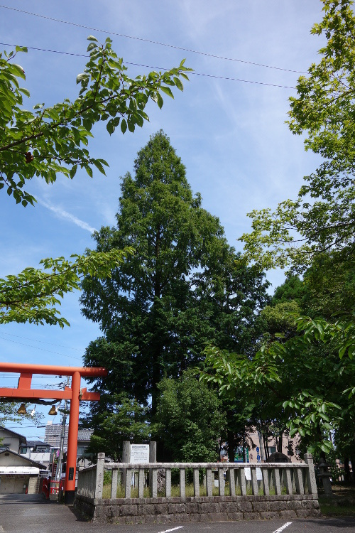 立木神社02-22