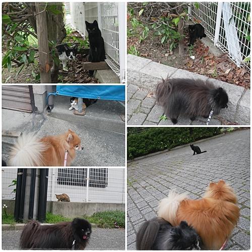 あった散歩であった猫たち