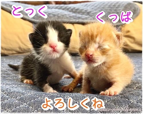 moblog_eea5b89f.jpg