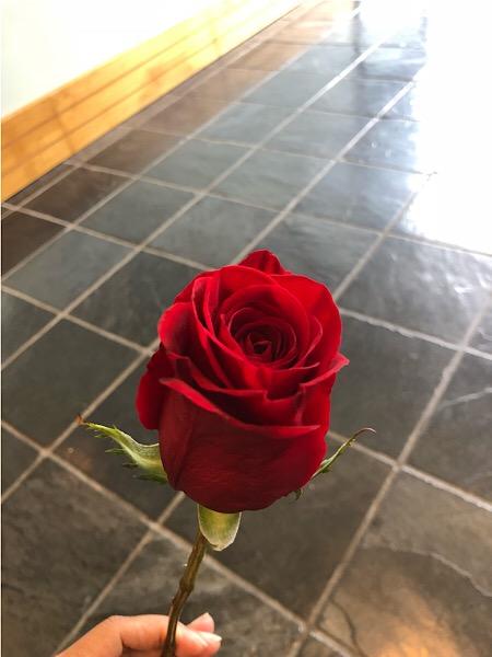 Rose 08292018