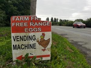 eggvendingmachine08184