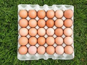 eggvendingmachine08185