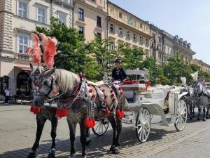 krakow081812