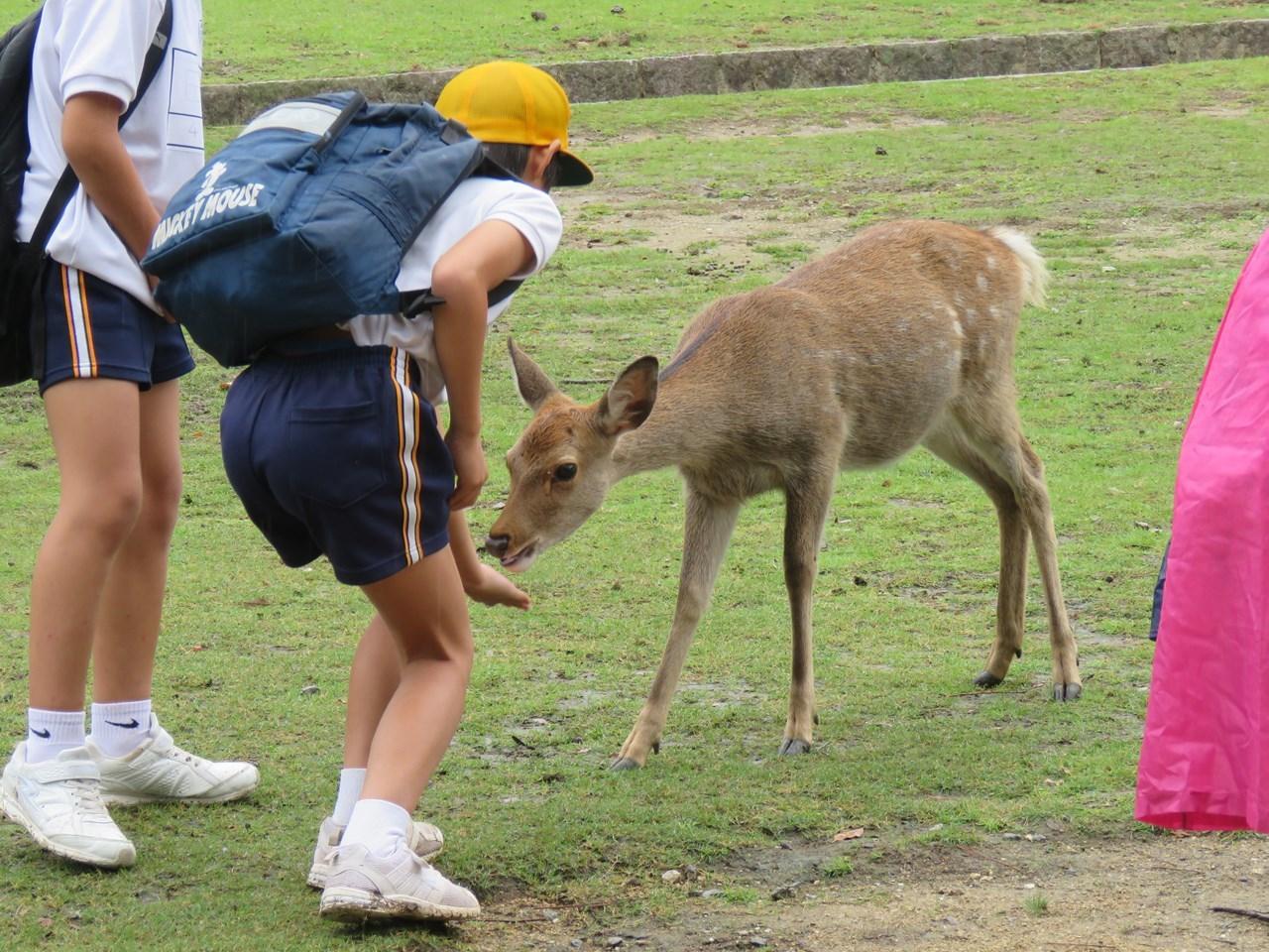 s-鹿の餌やりⅡ