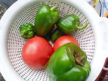 8-30収穫