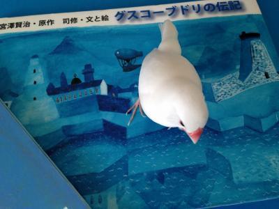butoritsukasa_.jpg
