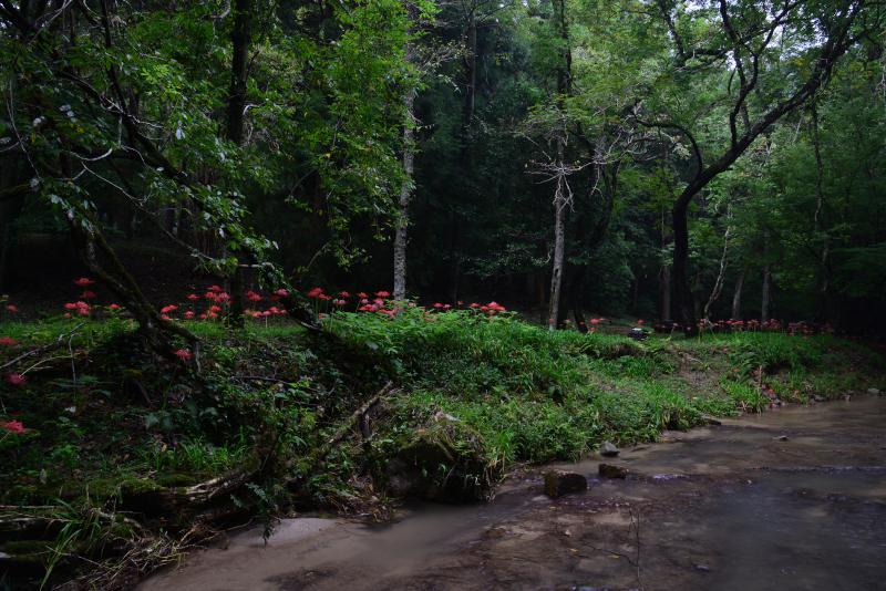 「川辺に咲く秋」2    (香川県三木町虹の滝)