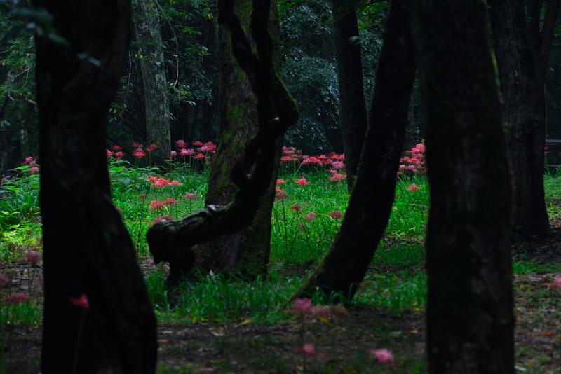 「川辺に咲く秋」3    (香川県三木町虹の滝)