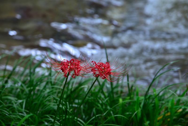 「川辺に咲く秋」4