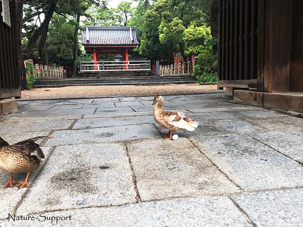 鴨-卵-住吉大社