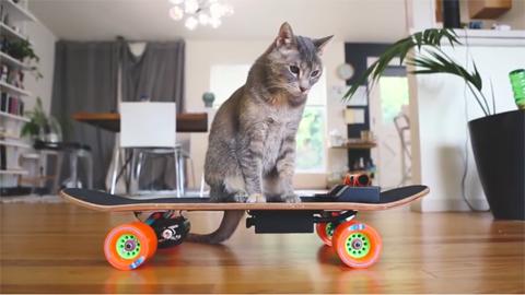 DIYelectricskateboardformycat!_1