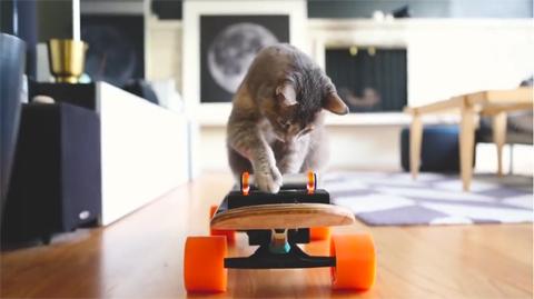 DIYelectricskateboardformycat!_2