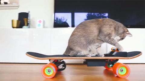 DIYelectricskateboardformycat!_5
