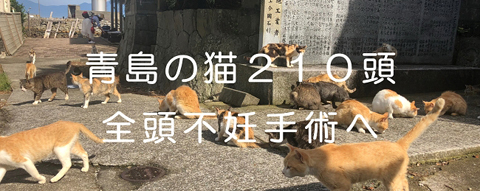 aoshimaTNR2018_3