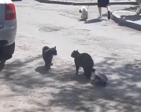 catfight+crow5